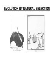 03 Evolution by natural selection