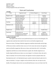 Stain and Conclusions writing assignment