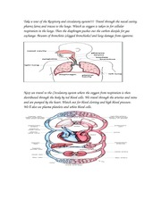 Take a tour of the Respitory and circulatory system