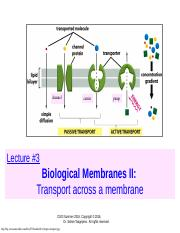 Lecture 3 Membrane Transport.pptx
