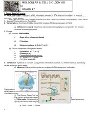 Outline CH 17 gene to protien