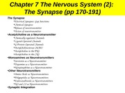 5_CH7_2_Synapse