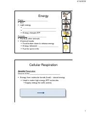 Bio 3 Lecture 13 Notes_Cellular Respiration.pdf