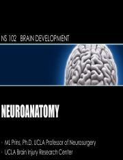 Lecture 3 - week 1 thrusday BRAIN DEVELOPMENT.pdf