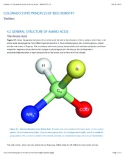Chapter 4.2General Structure of Amino Acids.pdf