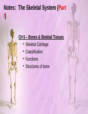 Notes - The Skeletal System (Part I-II).ppt