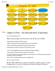 Chapter 16 DNA