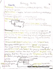 Notes on Phylogeny