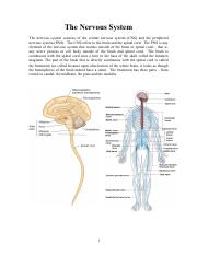 3) Intro to Nervous System(1).pdf