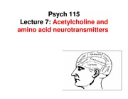 Lecture_7-ACh_and_amino_acid_neurotransmitters-1_side