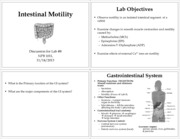 Lab 8 - Intestinal Motility