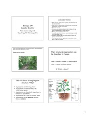 Lecture_7_Plant_structure_growth_