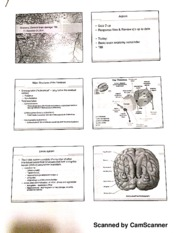 Anatomy, General Brain Damage, TBI