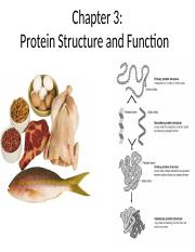 Chapter 3 Proteins