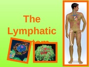 6 - Lymphatic System Class Notes
