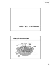 ANP 300 - Lecture 3 - Tissues and Integument