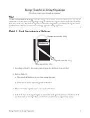 Image Result For Energy Transfer In Living Organisms Pogil Answers
