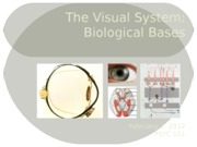 Psyc_101_spr_12__The_Visual_System_Bb