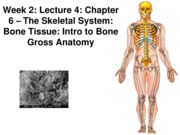 Z331 Fall 2010 Ecampus Week 2 Lecture 4 Intro Bone Gross Anatomy Posted