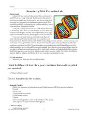 DNA Lab Sheet.pdf - Name Strawberry DNA Extraction Lab ...