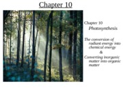 Ch_10_Photosynthesis