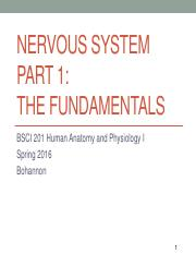 BSCI 201 Lecture 17 COMPLETE - Nervous System Part 1.pdf