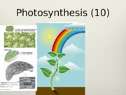 3 Photosynthesis