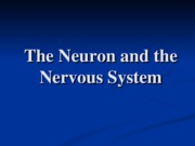 Week 2 -The Brain and nervous system SV