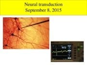 Neural transduction lecture