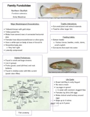 Fundulidae fact sheet
