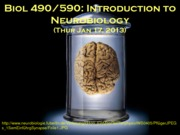 1 - Thur, Jan 17 - B490 Introduction to Neurobiology
