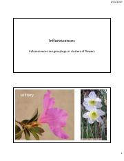 Module 3 Unit 8 - Inflorescences HD.pdf