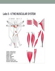 Lab6 - MuscleStudent