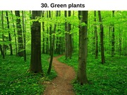Evolution of Green Plants