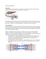 Sarcomere_Overview