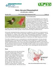 Ruby-throated_hummingbird.pdf