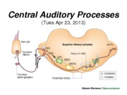 22 -Tues Apr 23 -  B490 Central Auditory Process