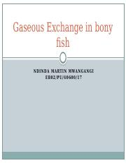 Gaseous Exchange in Bony Fish.pptx