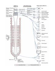 1503_Connections_of_the_Parasympathetic_Nervous_System.jpg