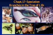 PF14-Lecture 26 -Chapt.17-Speciation-Nov.5