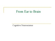 From Ear to Brain