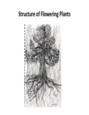 Flower & Root Stuctures