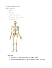 Intro to the Skeletal System Notes
