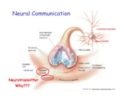Synaptic Transmission & Neurotransmitters