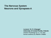 7 A-The Nervous system, Neurons and synapses