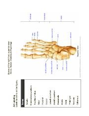 Foot superior view labeling.pdf