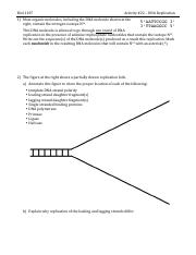 Activity 22  DNA Replication
