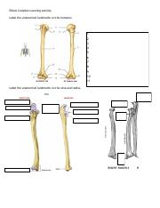 Elbow Complex Learning Activity.pdf