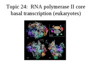 Topic 24, RNA pol II core basal transcription
