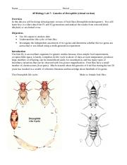 fruit fly lab _my_version (1).doc